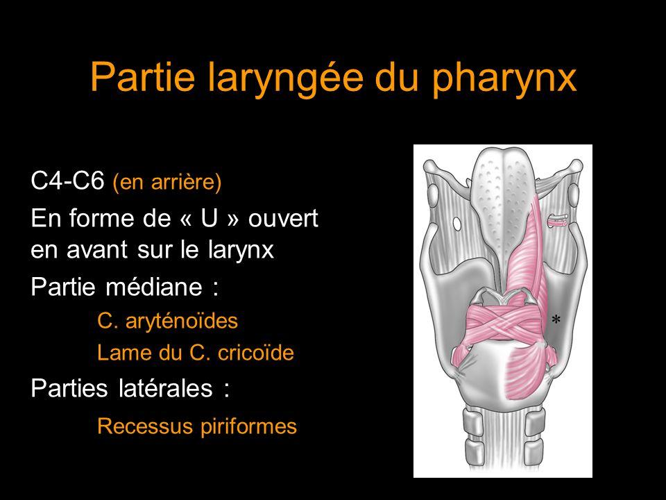 Partie laryngée du pharynx C4-C6 (en arrière) En forme de « U » ouvert en avant sur le larynx Partie médiane : C. aryténoïdes Lame du C. cricoïde Part