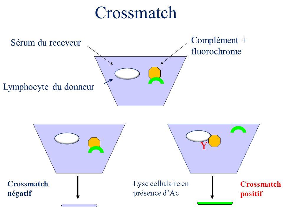 Y Sérum du receveur Complément + fluorochrome Lyse cellulaire en présence dAc Lymphocyte du donneur Crossmatch Crossmatch négatif Crossmatch positif