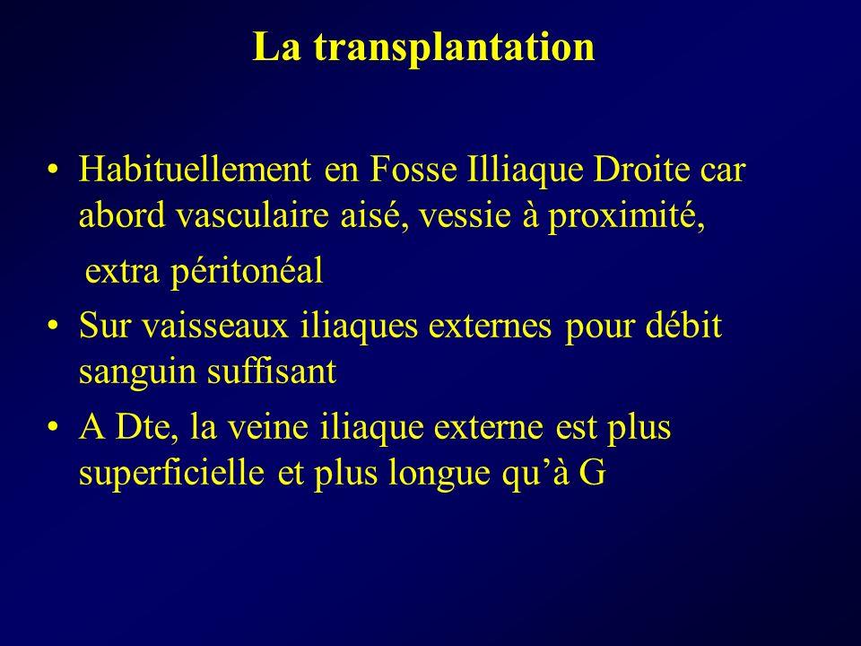 La transplantation Habituellement en Fosse Illiaque Droite car abord vasculaire aisé, vessie à proximité, extra péritonéal Sur vaisseaux iliaques exte