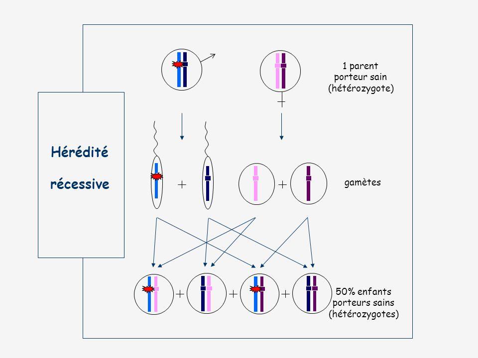Hérédité récessive 1 parent porteur sain (hétérozygote) gamètes 50% enfants porteurs sains (hétérozygotes)