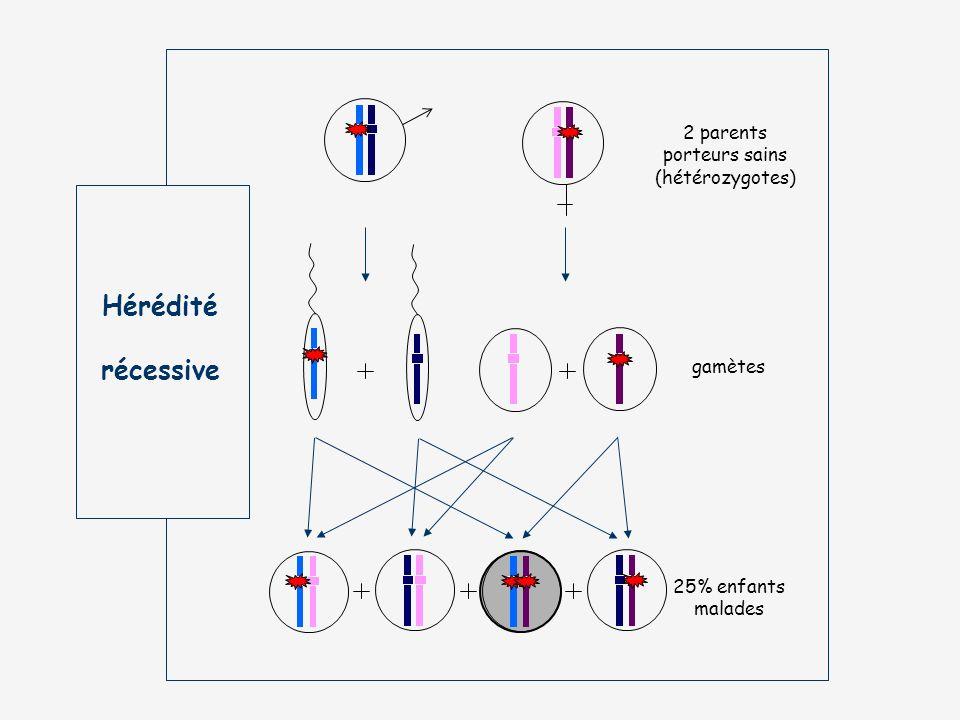 Hérédité récessive 2 parents porteurs sains (hétérozygotes) gamètes 25% enfants malades
