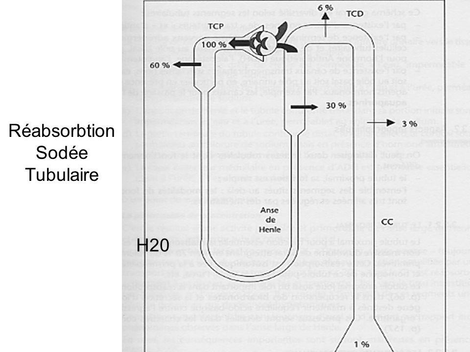 Diurétiques du T collecteur cortical = épargneurs de potassium Amiloride/ Triamtérène : inhibe ENaC et sécrétion de K+ Anti-aldostérone : inhibe ENaC et pompe Na/K/ATP ase FeNa = 1-3%