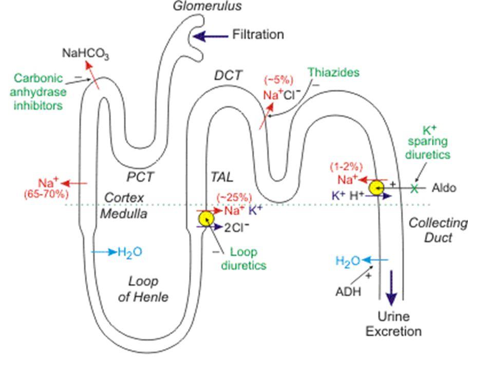 T collecteur cortical Na+ 3Na 2K Aldostérone K+ + + SPIRONOLACTONE - Amiloride/triamtérène - -