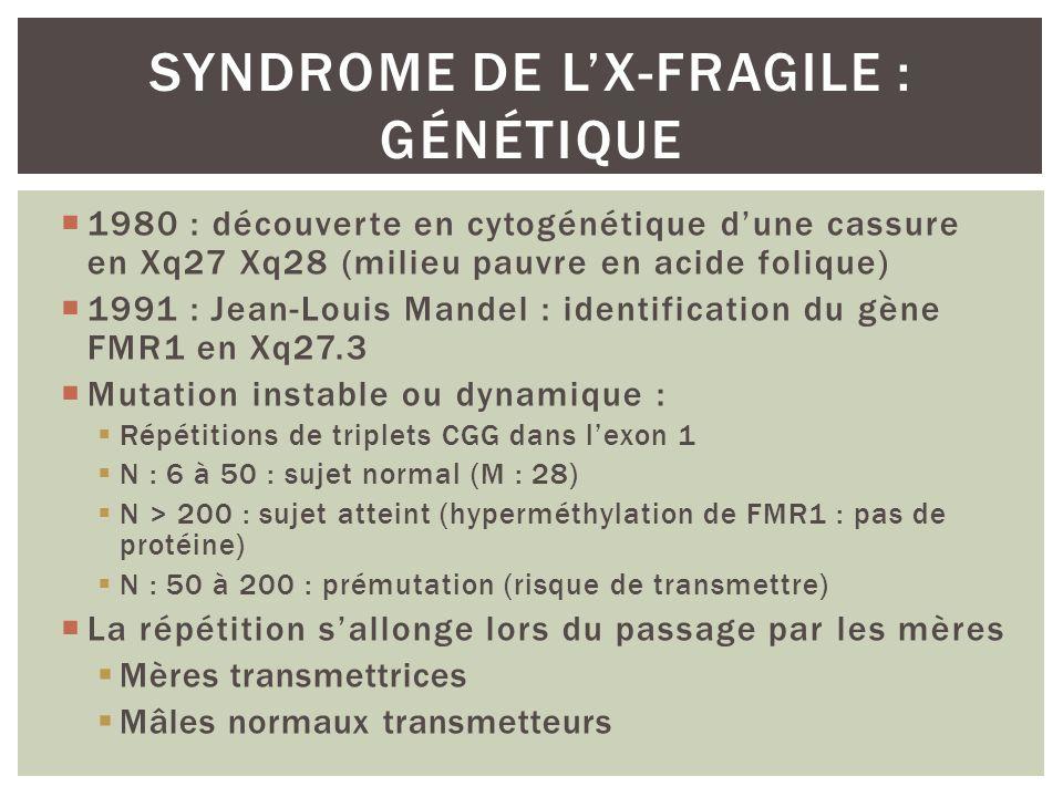 1980 : découverte en cytogénétique dune cassure en Xq27 Xq28 (milieu pauvre en acide folique) 1991 : Jean-Louis Mandel : identification du gène FMR1 e