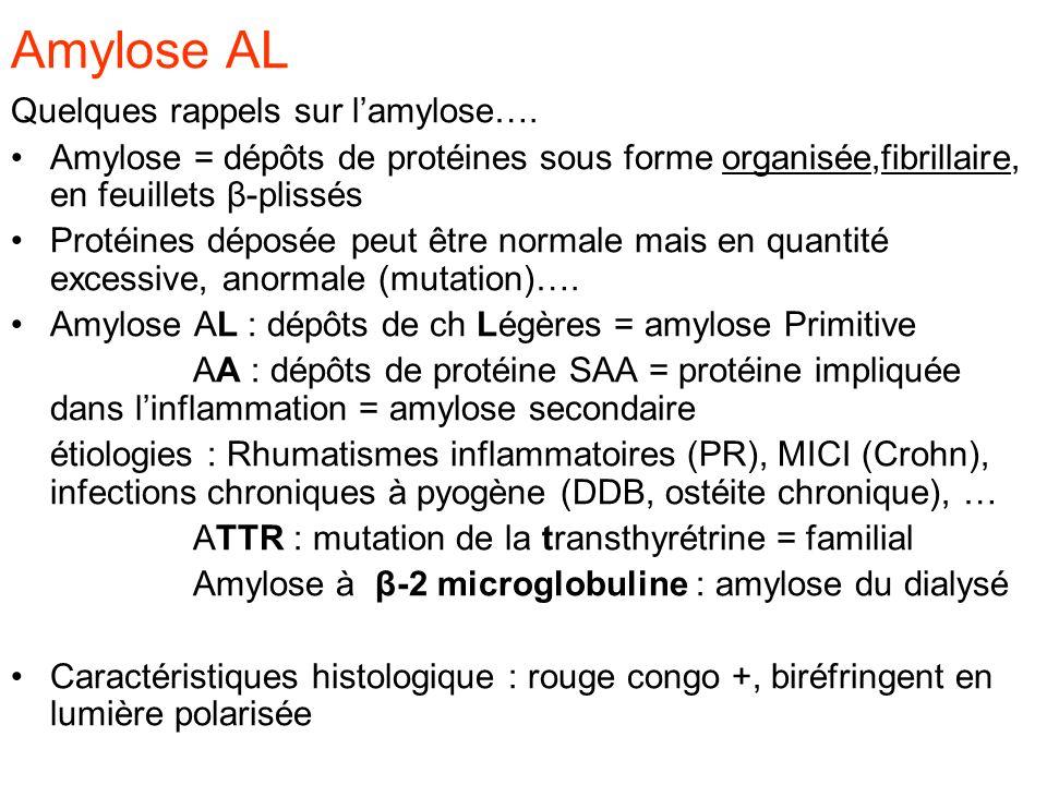 Amylose AL Quelques rappels sur lamylose…. Amylose = dépôts de protéines sous forme organisée,fibrillaire, en feuillets β-plissés Protéines déposée pe
