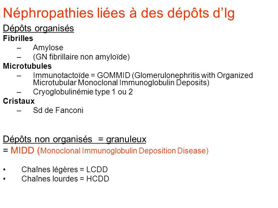 Néphropathies liées à des dépôts dIg Dépôts organisés Fibrilles –Amylose –(GN fibrillaire non amyloïde) Microtubules –Immunotactoïde = GOMMID (Glomeru
