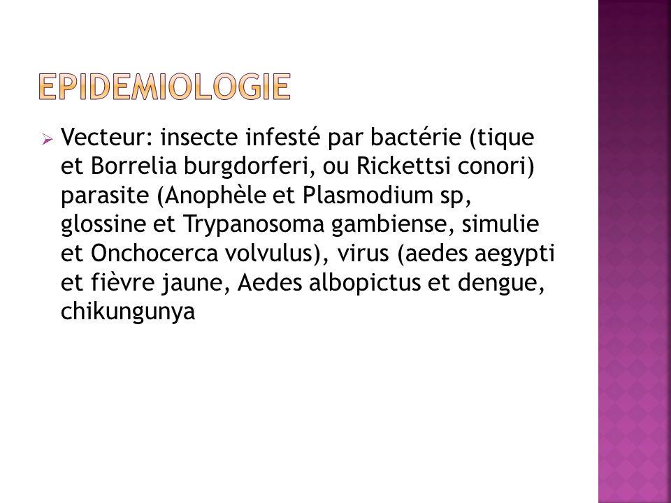Vecteur: insecte infesté par bactérie (tique et Borrelia burgdorferi, ou Rickettsi conori) parasite (Anophèle et Plasmodium sp, glossine et Trypanosom