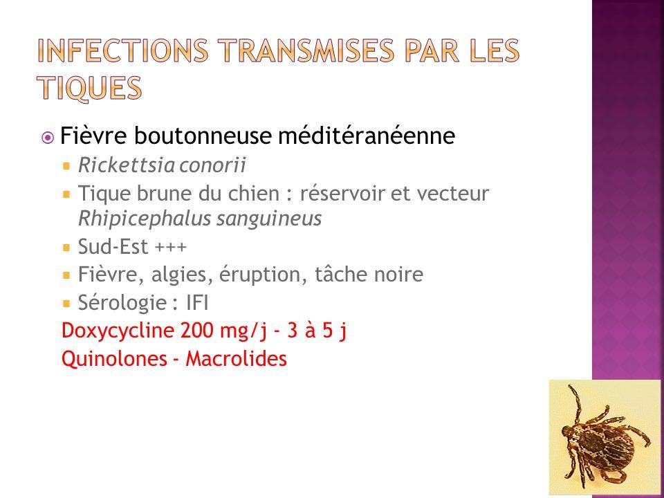 Fièvre boutonneuse méditéranéenne Rickettsia conorii Tique brune du chien : réservoir et vecteur Rhipicephalus sanguineus Sud-Est +++ Fièvre, algies,