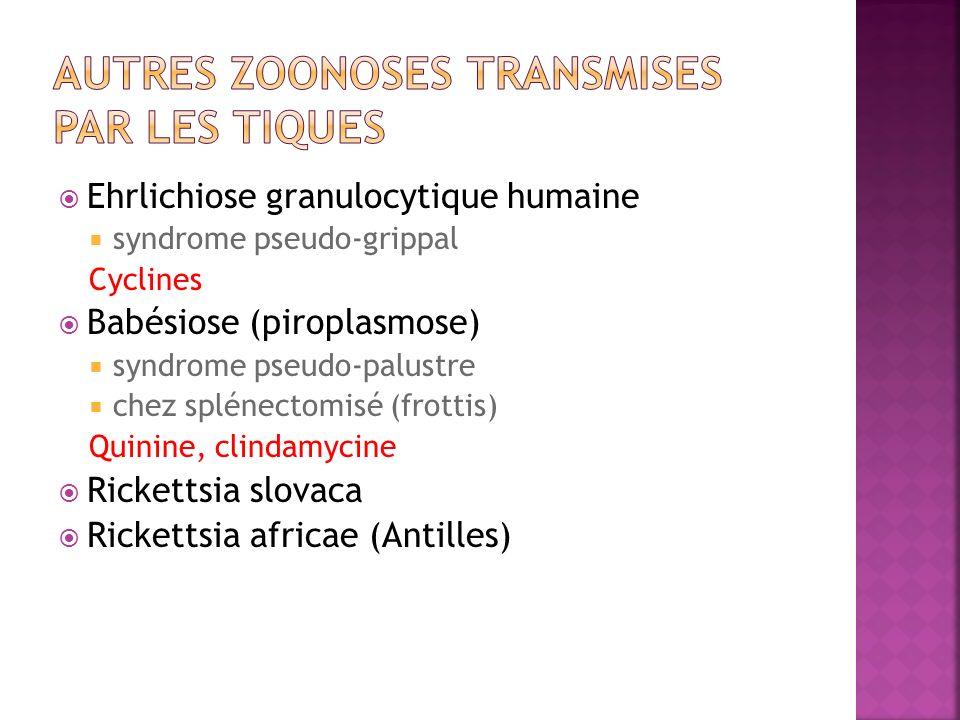 Ehrlichiose granulocytique humaine syndrome pseudo-grippal Cyclines Babésiose (piroplasmose) syndrome pseudo-palustre chez splénectomisé (frottis) Qui