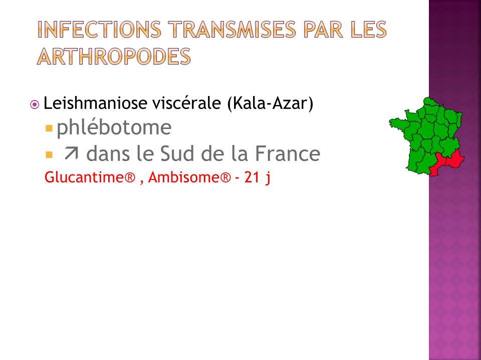 Leishmaniose viscérale (Kala-Azar) phlébotome dans le Sud de la France Glucantime®, Ambisome® - 21 j