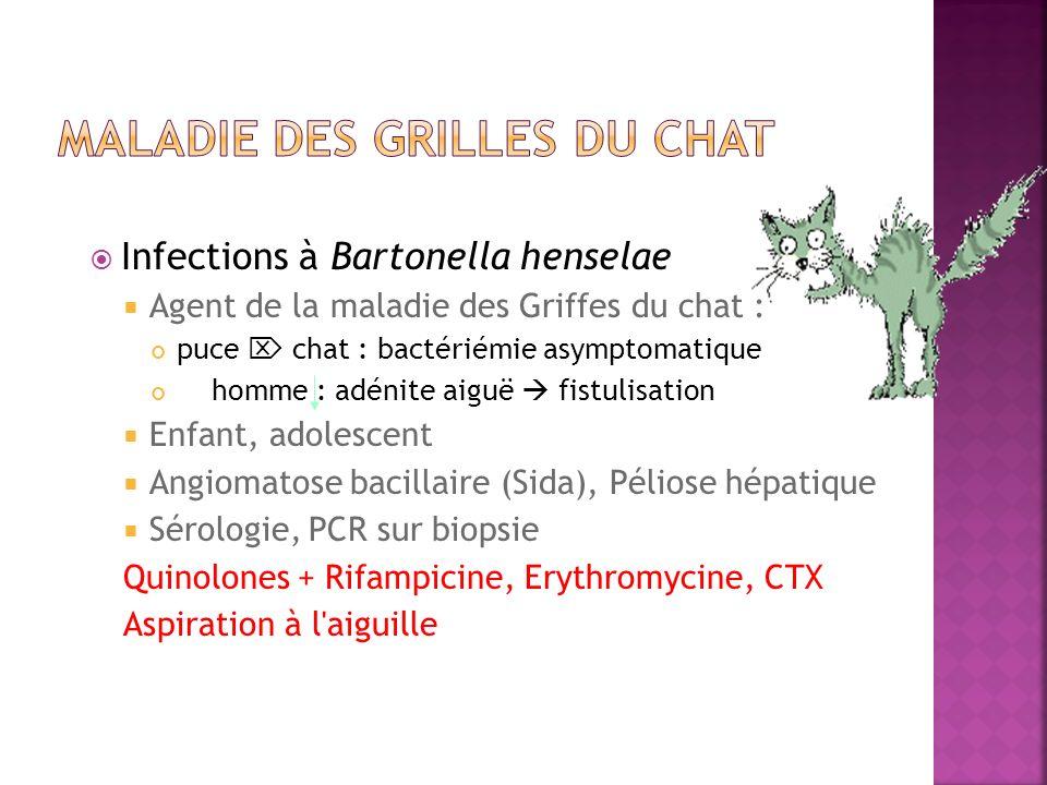 Infections à Bartonella henselae Agent de la maladie des Griffes du chat : puce chat : bactériémie asymptomatique homme : adénite aiguë fistulisation