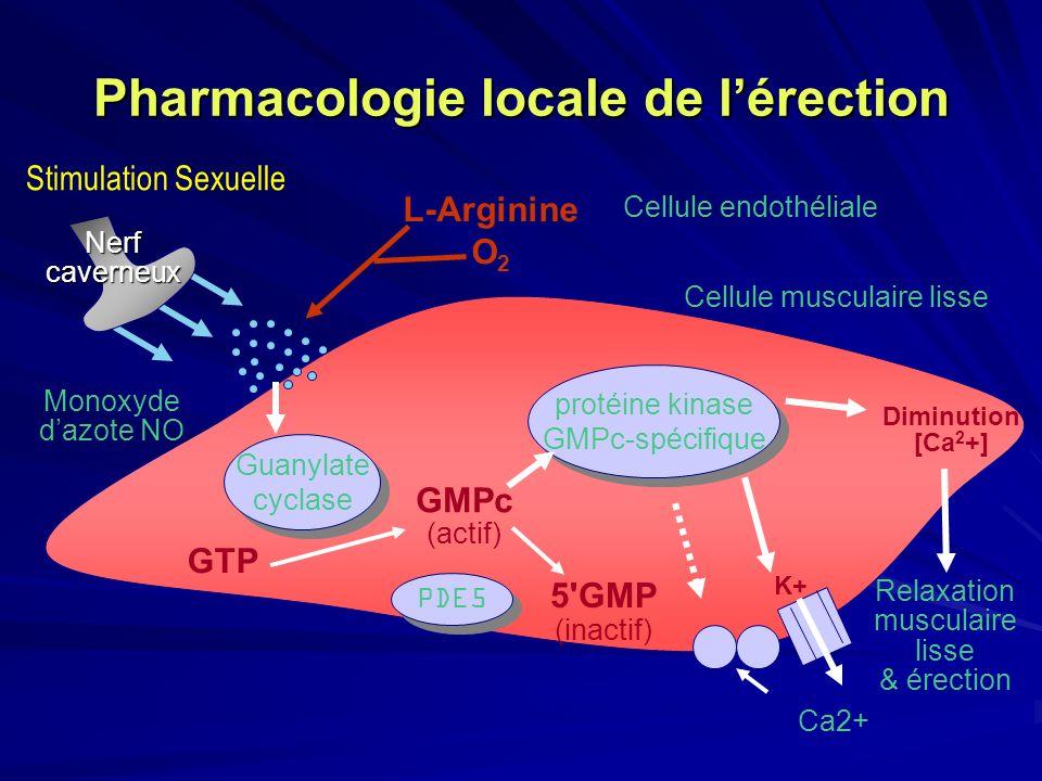 Pharmacologie locale de lérection protéine kinase GMPc-spécifique protéine kinase GMPc-spécifique Cellule endothéliale L-Arginine O 2 Guanylate cyclas