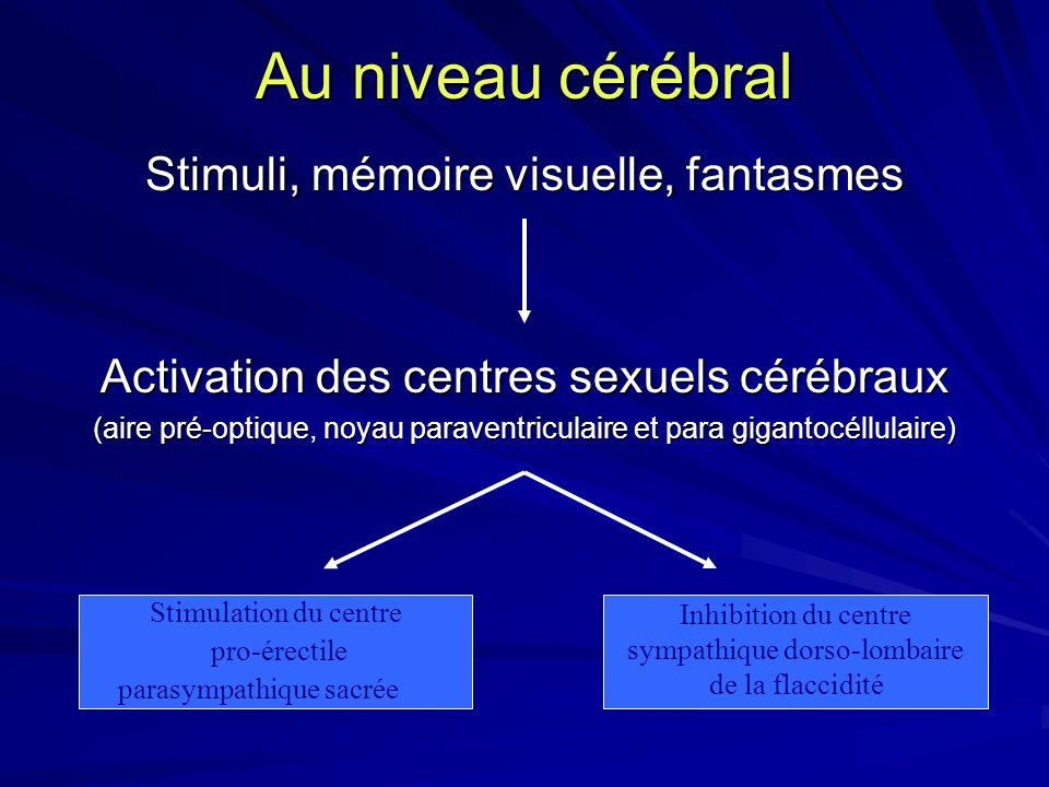 Stimuli, mémoire visuelle, fantasmes Activation des centres sexuels cérébraux (aire pré-optique, noyau paraventriculaire et para gigantocéllulaire) St