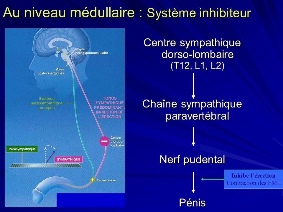 Au niveau médullaire : Système inhibiteur Centre sympathique dorso-lombaire (T12, L1, L2) Chaîne sympathique paravertébral Nerf pudental Pénis Inhibe