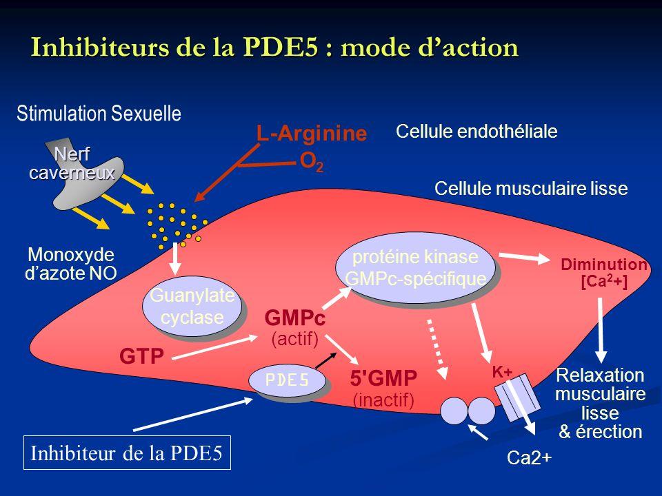 Inhibiteurs de la PDE5 : mode daction protéine kinase GMPc-spécifique protéine kinase GMPc-spécifique Cellule endothéliale L-Arginine O 2 Guanylate cy