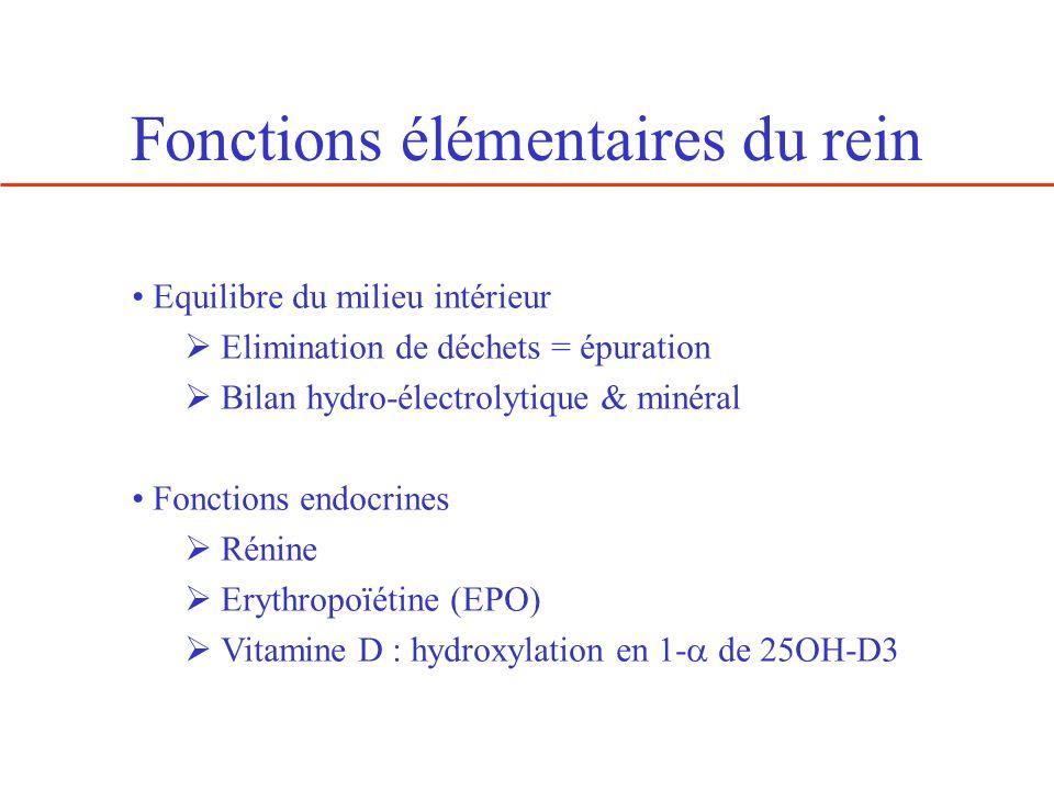 Fonctions élémentaires du rein Equilibre du milieu intérieur Elimination de déchets = épuration Bilan hydro-électrolytique & minéral Fonctions endocri