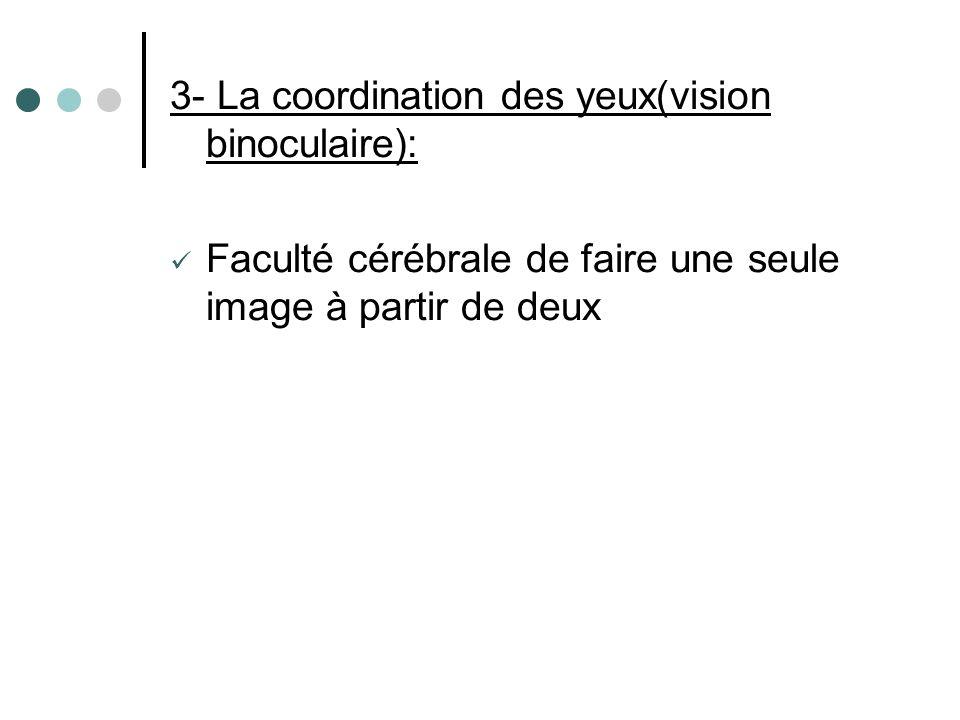 3- La coordination des yeux(vision binoculaire): Faculté cérébrale de faire une seule image à partir de deux
