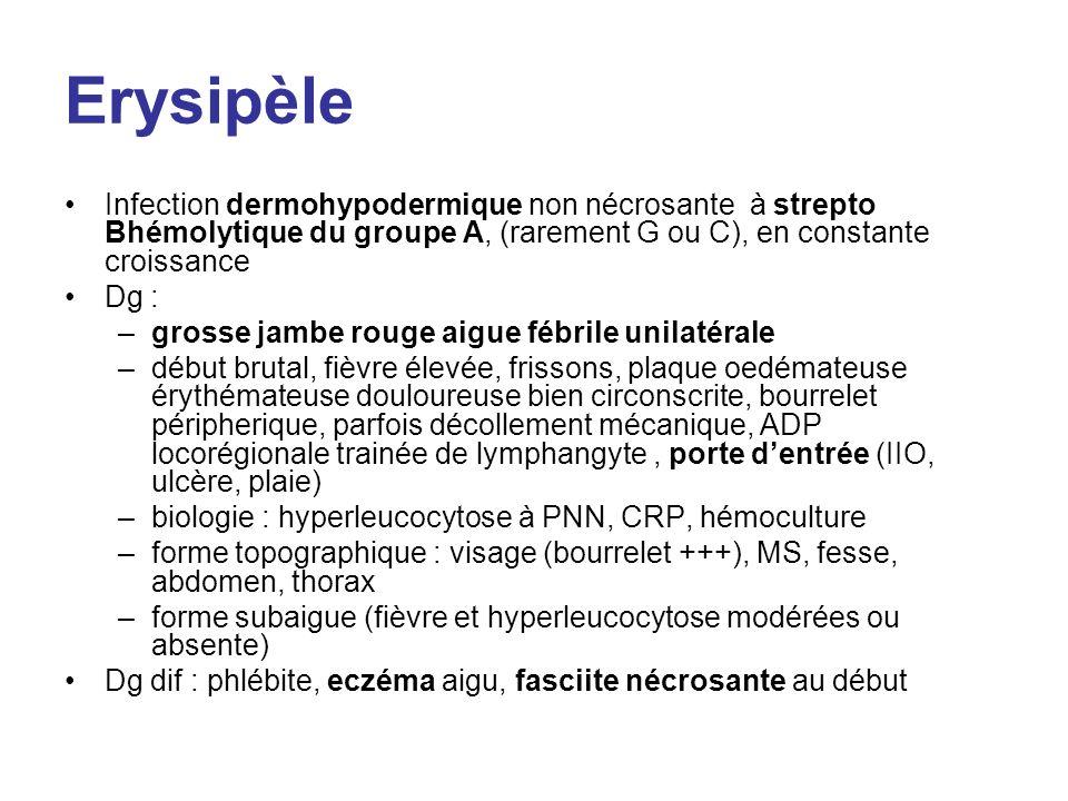 Bartonelloses Nombreuses espèces Fièvre des tranchées transmises par poux Maladies des griffes du chat (B.henselae) : –Atcd de griffure ou morsure de chat –Papule transitoire sur le trait de griffure –ADP de drainage –Angiomatose bacillaire chez ID Diagnostic –Sérologique –Coloration de Warthin-Starry –PCR Traitement : efficace chez lID –Érythromycine, rifampicine, doxycycline pendant 6 semaines