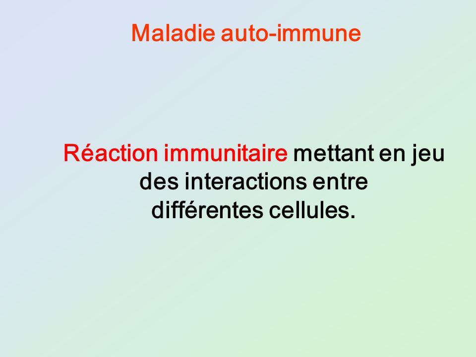 Réaction immunitaire mettant en jeu des interactions entre différentes cellules. Maladie auto-immune