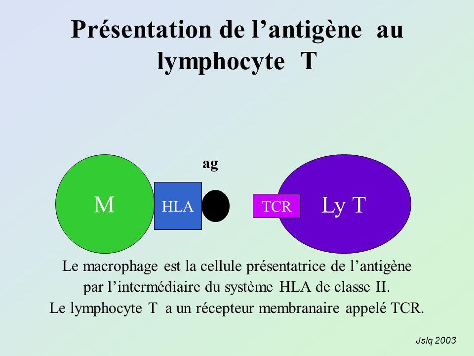 Présentation de lantigène au lymphocyte T MLy T ag HLA TCR Le macrophage est la cellule présentatrice de lantigène par lintermédiaire du système HLA d