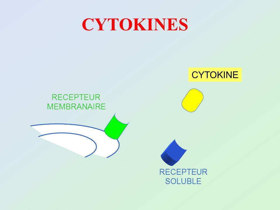 RECEPTEUR MEMBRANAIRE RECEPTEUR SOLUBLE CYTOKINE CYTOKINES
