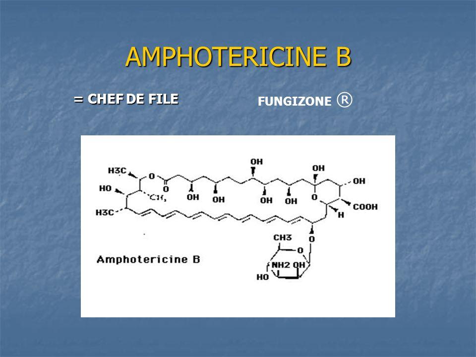 FLUCYTOSINE Mode daction Mode daction Blocage de la synthèse protéique Blocage de la synthèse protéique La spécificité d action sur les cellules fongiques est due à la spécificité de la cytosine perméase qui n existe pas chez les mammifères La spécificité d action sur les cellules fongiques est due à la spécificité de la cytosine perméase qui n existe pas chez les mammifères Action synergique avec l amphotéricine B (lyse membranaire qui augmente la pénétration cellulaire de la flucytosine d où réduction des résistances) Action synergique avec l amphotéricine B (lyse membranaire qui augmente la pénétration cellulaire de la flucytosine d où réduction des résistances) Indications Indications Toujours en association Toujours en association Mycoses neurologiques (cryptococcose) Mycoses neurologiques (cryptococcose)