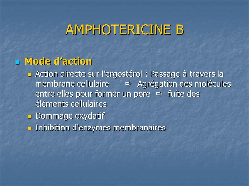 AMPHOTERICINE B Mode daction Mode daction Action directe sur lergostérol : Passage à travers la membrane cellulaire Agrégation des molécules entre ell