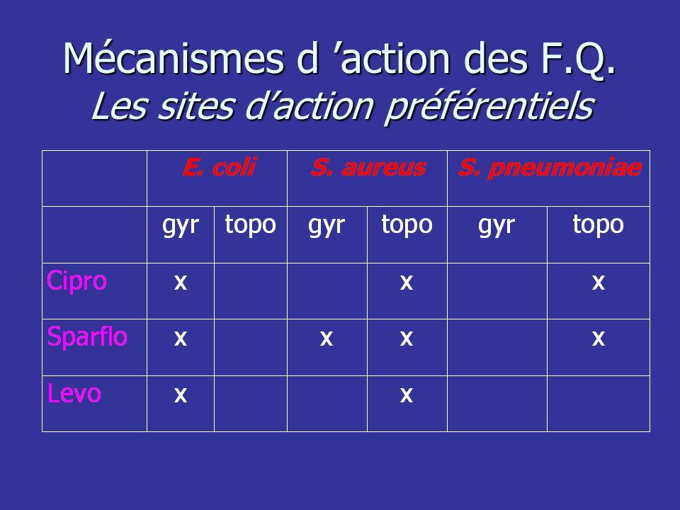 Mécanismes d action des F.Q. Les sites daction préférentiels
