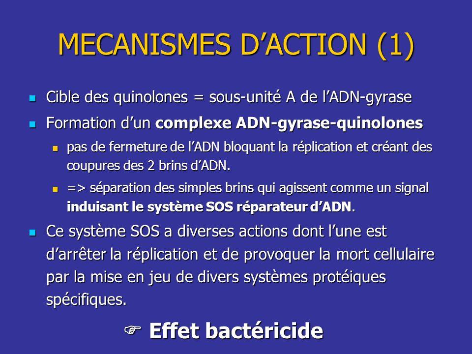 MECANISMES DACTION (1) Cible des quinolones = sous-unité A de lADN-gyrase Cible des quinolones = sous-unité A de lADN-gyrase Formation dun complexe AD