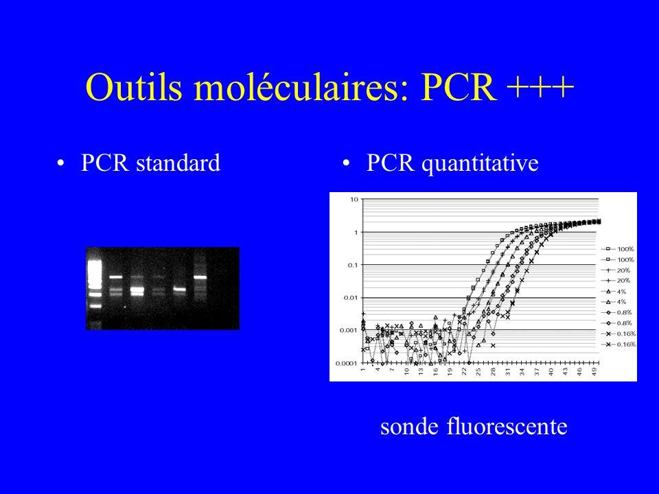 Outils moléculaires: PCR +++ PCR standardPCR quantitative sonde fluorescente