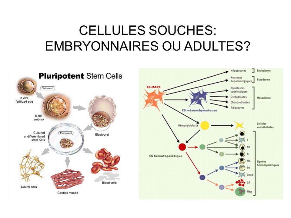 CELLULES SOUCHES: EMBRYONNAIRES OU ADULTES?