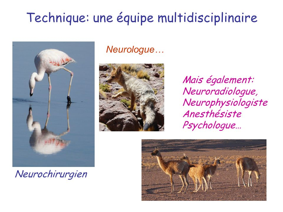 Technique: une équipe multidisciplinaire Neurochirurgien Neurologue… Mais également: Neuroradiologue, Neurophysiologiste Anesthésiste Psychologue…