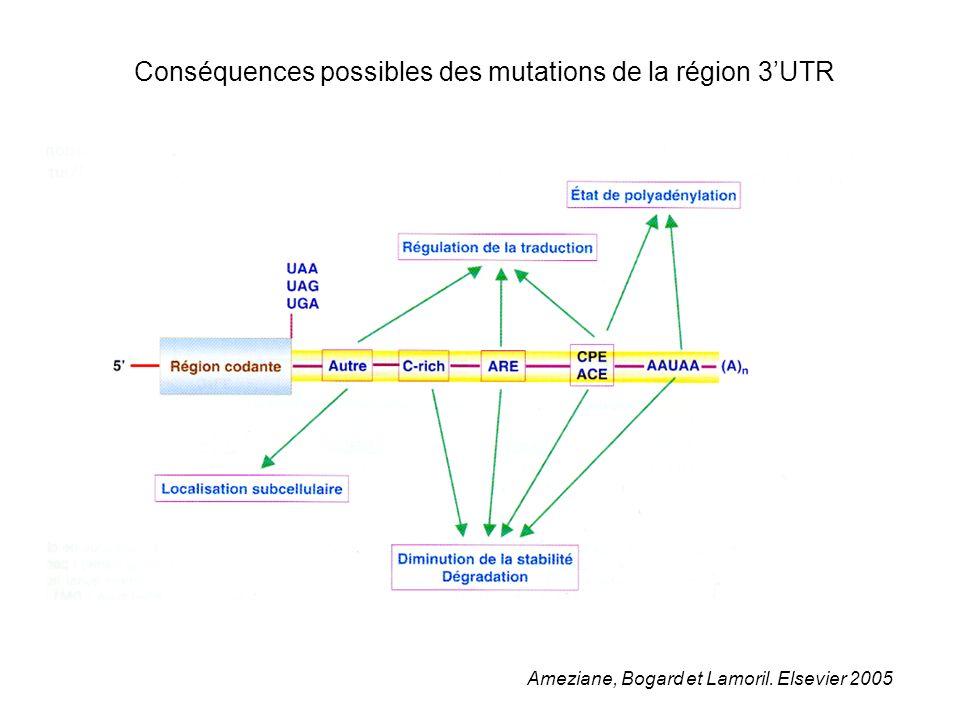 Conséquences possibles des mutations de la région 3UTR