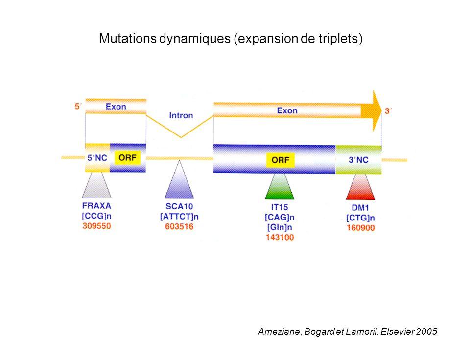 Ameziane, Bogard et Lamoril. Elsevier 2005 Mutations dynamiques (expansion de triplets)