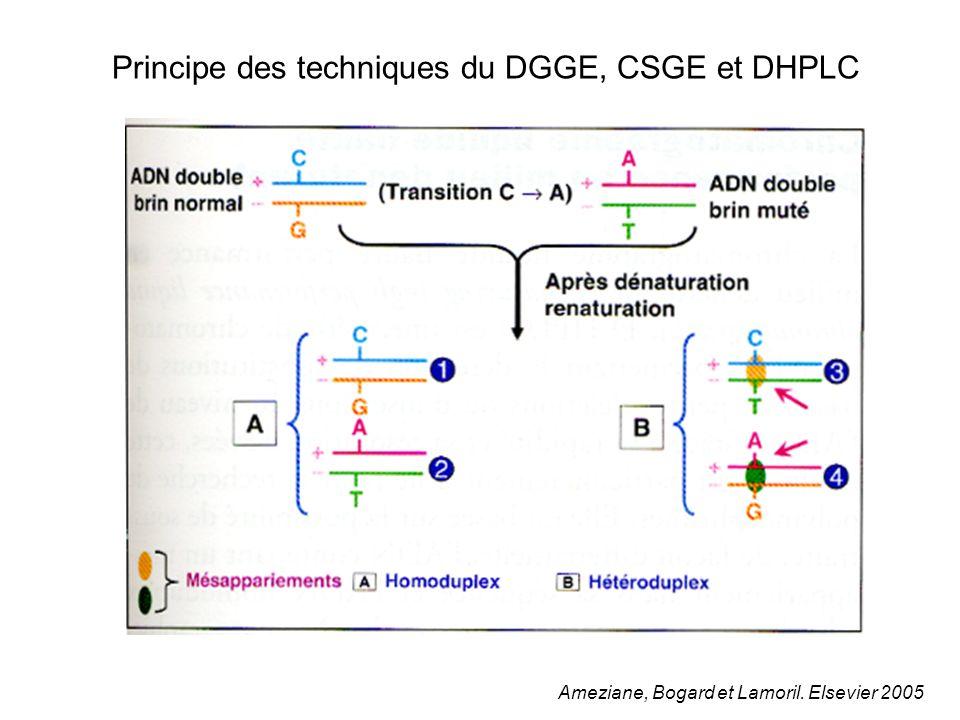 Principe des techniques du DGGE, CSGE et DHPLC