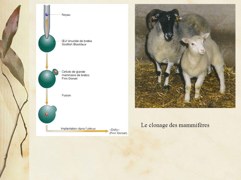 La fusion cellulaire montre le caractère réversible de linactivation des gènes au cours de la différenciation cellulaire