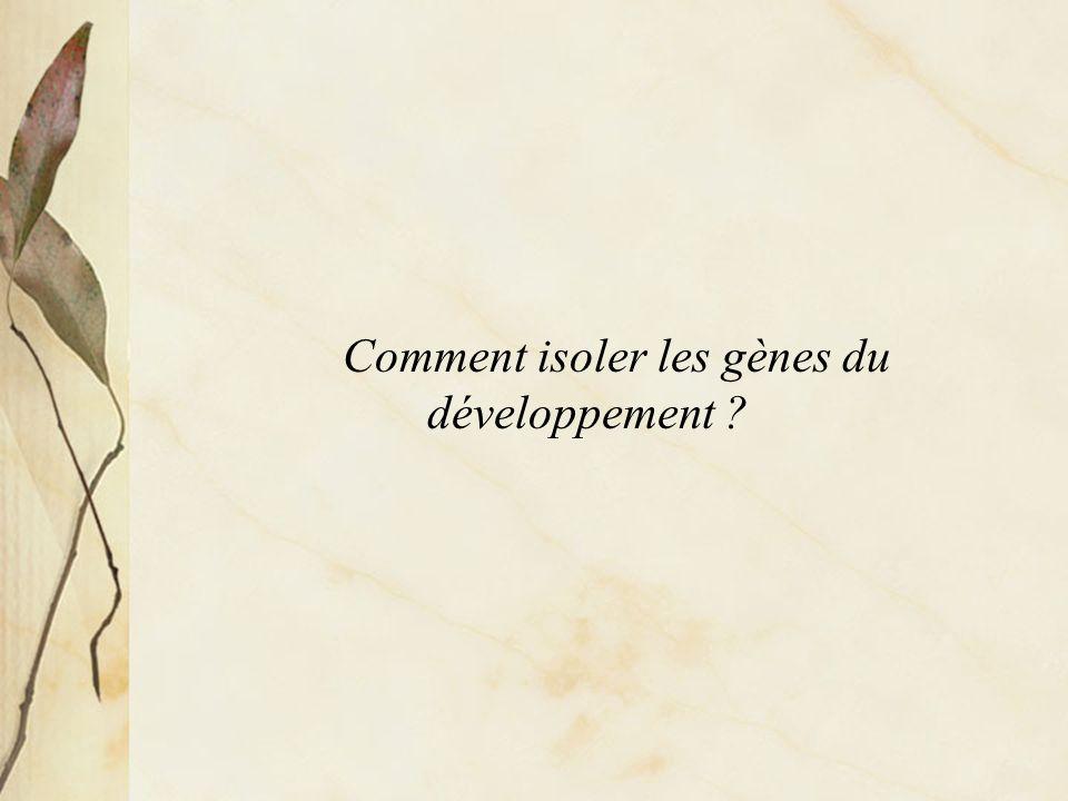 Comment isoler les gènes du développement ?