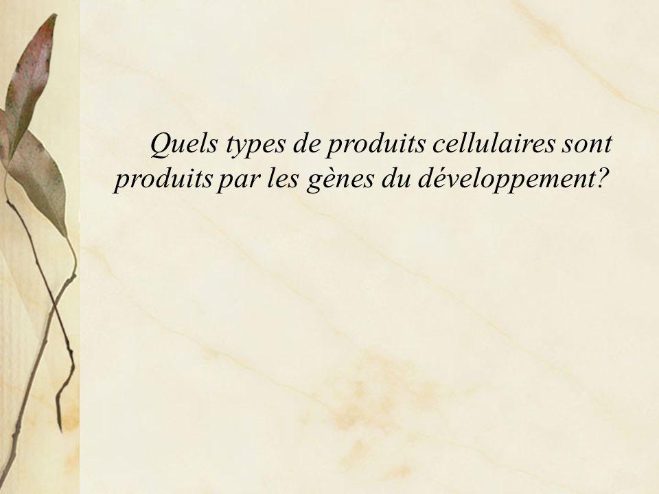 Principalement des protéines Pour la plupart, des protéines impliquées dans la régulation de lexpression génique ou dans des communications entre les cellules