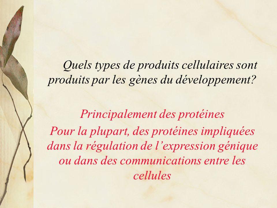 Quels types de produits cellulaires sont produits par les gènes du développement.