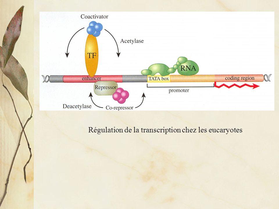 Les gènes du développement sont eux-mêmes souvent transcrits et/ou leurs produits actifs que dans certaines r é gions de l embryon