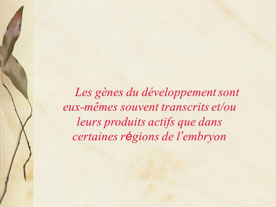 Transcription différentielle de gènes au cours du développement