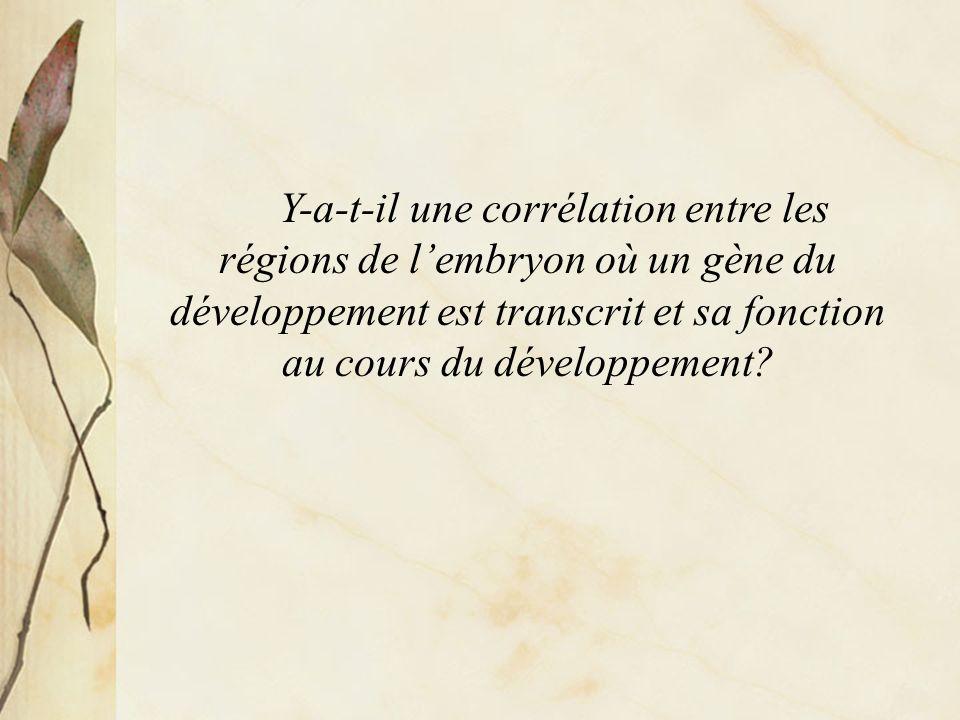 Y-a-t-il une corrélation entre les régions de lembryon où un gène du développement est transcrit et sa fonction au cours du développement?