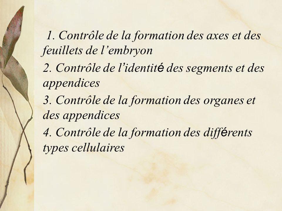 1.Contrôle de la formation des axes et des feuillets de lembryon 2.