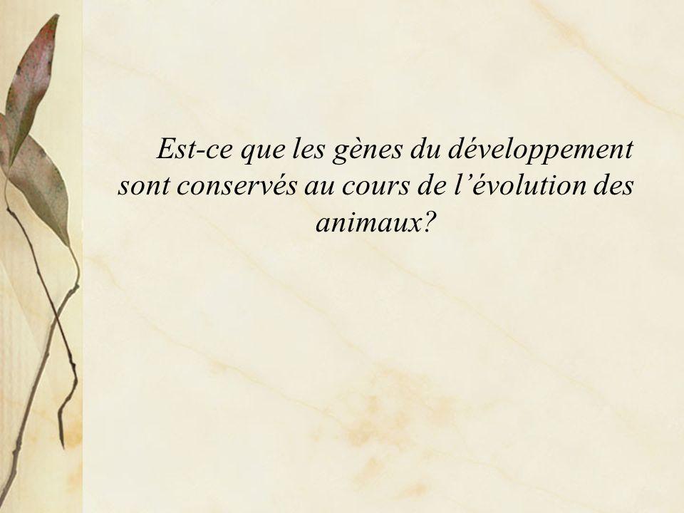 Est-ce que les gènes du développement sont conservés au cours du développement des animaux.