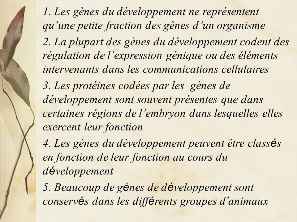 1. Les gènes du développement ne représentent quune petite fraction des gènes dun organisme 2. La plupart des gènes du développement codent des régula
