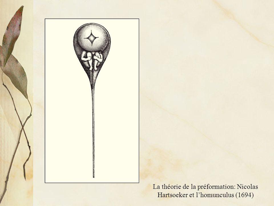 La théorie de lépigenèse: Kaspar Friedrich Wolff et la « Theoria Generationis » (1759)