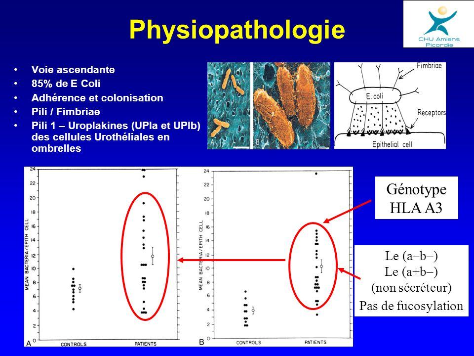 Généralités Infections fréquentes non spécifiques Origine ascendante Favorisées par un terrain (diabète, grossesse, HBP…) Plus souvent = BG- (E Coli) Agents fréquents dans pathologie urétrale = Techniques didentification spéciales (CT, UU, GV) Infections dites « spécifiques » = BK, Bilharzie, gonocoque Deux situations –Infections fébriles (parenchyme) –Infections non fébrile (cystite)