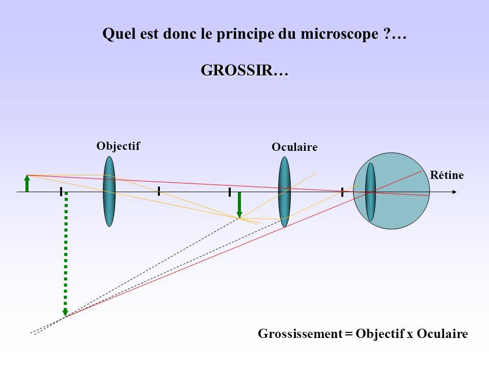 Rétine Quel est donc le principe du microscope ?… OculaireGROSSIR… Objectif Grossissement = Objectif x Oculaire