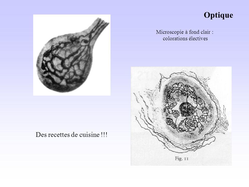 Optique Microscopie à fond clair : colorations électives Des recettes de cuisine !!!