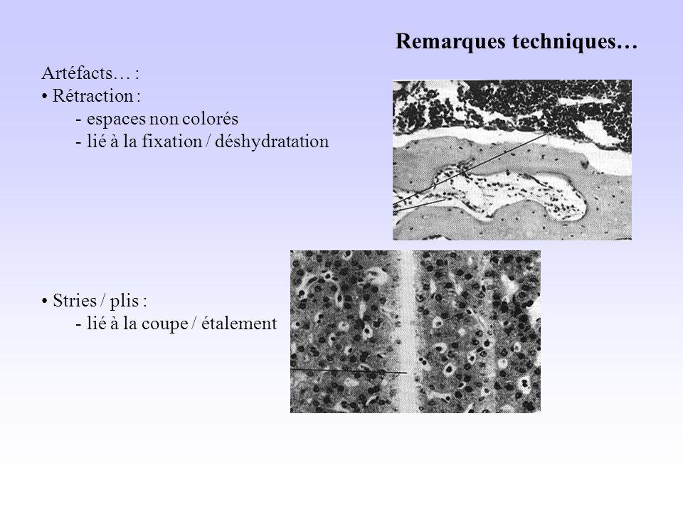 Remarques techniques… Artéfacts… : Rétraction : - espaces non colorés - lié à la fixation / déshydratation Stries / plis : - lié à la coupe / étalement